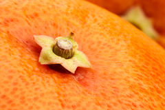 Grapefruit stem Royalty Free Stock Photography