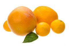 Grapefruit, tangerin and orange Royalty Free Stock Images