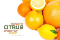 Grapefruit, tangerine, lemon, orange Stock Photos
