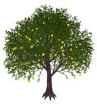 Grapefruit tree - 3D render Stock Photography