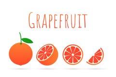 grapefruit Uma toranja inteira e um corte Ilustração do vetor ilustração stock