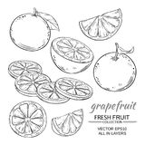 Grapefruit vector set. Grapefruit fruit vector set on white background vector illustration