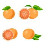 grapefruit Vetor ilustração royalty free