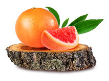 Grapefruit on a wooden сross section of tree trunk isolated on stock photography