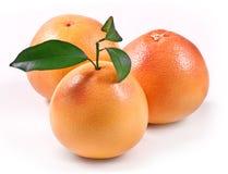 grapefruit zielonego liść dojrzały whith Zdjęcie Royalty Free