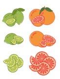 grapefruitowego wapna ustaleni plasterki Zdjęcie Royalty Free