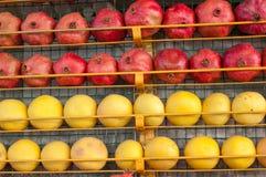 Grapefruitowy i granatowiec owoc tło cytrusa cytrusów świeży grupowy pomarańczowy tangerine biel Rynek w Istanbuł Zdjęcie Stock