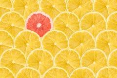 Grapefruitowy plasterek Stoi Out Od tłumu Obraz Royalty Free