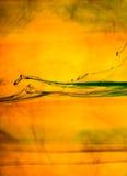 Grapefruitowy plasterek w wodzie obraz royalty free