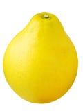 grapefruitowy pomelo Obraz Stock
