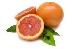 grapefruitowy rubin Obrazy Royalty Free