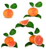 Grapefruits. Isolated on white background Stock Photo