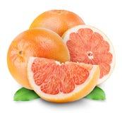 Grapefruits fotografia royalty free