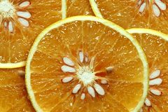 Grapefruits Stock Image