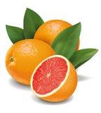 grapefruits Royalty-vrije Stock Fotografie