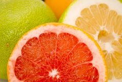 Grapefruits. Citrus Fruits - red and green grapefruits Stock Photography