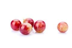 grapefruits obraz stock