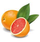 Grapefruits royalty free stock photos
