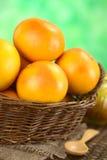 Grapefruits in Mand stock afbeelding
