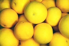 Grapefruits in a pile Stock Image