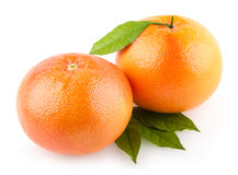 Grapefruits Royalty Free Stock Photos