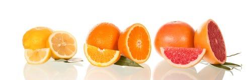 Grapefruits, sinaasappelen en citroenen, op wit prachtig worden gelegd dat Royalty-vrije Stock Foto's