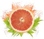 grapefrukt royaltyfri foto