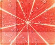 grapefrukt stock illustrationer