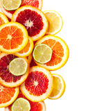 Grapefrukt-, apelsin-, limefrukt- och citronskivor royaltyfri foto