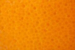 Grapefrukt eller orange textur Arkivfoton