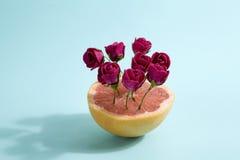 Grapefrukt och röda rosor Arkivbild