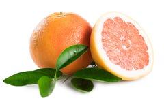 grapefrukt som isoleras på vit bakgrund arkivfoto