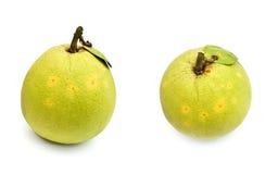 grapefrukten isolerade två Arkivfoton