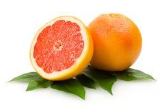 grapefrukter Fotografering för Bildbyråer
