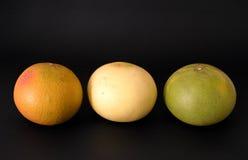 grapefrukter tre arkivbild