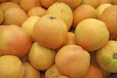 grapefruktförsäljning Fotografering för Bildbyråer