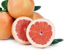 grapefruktpink Arkivbild