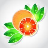 grapefruktvektor Arkivfoto