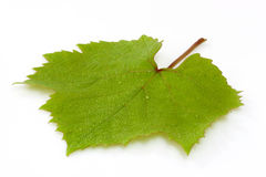 Grapeleaf Royalty Free Stock Photos