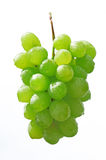 Grapes Royalty Free Stock Images