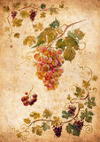 Grapes. Bunch of grapes. Watercolor. Grape frame royalty free illustration