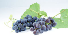 Grapes. Royalty Free Stock Photo