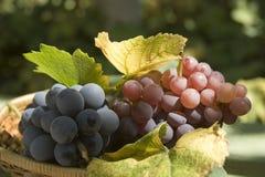 Grapes. Basket of fresh grapes tight Royalty Free Stock Photo