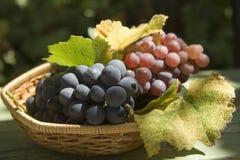 Grapes. Basket of grapes tight Stock Photos