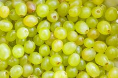 Grapes. Fresh green grapes stock photography
