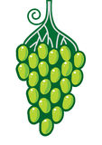 Grapes. Vector green grapes on white. Symbol Stock Photos