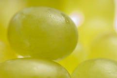 Grapes. Close up of green grapes Stock Image