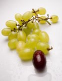 Grapes. Close up of green grapes with single red grape Royalty Free Stock Photos