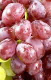 Grapes. Close-up of red and green grapes Stock Photography