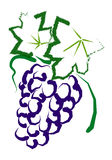 Grapes. Hand drawing grapes with white background Royalty Free Stock Photo
